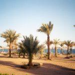 Gafy vista dune